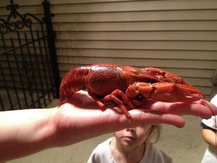 largest crawfish ever