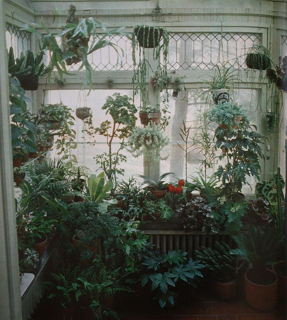 Transform your home into a Rainforest Jungle (& list of ... Tropical House Plants List