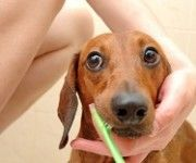 how to train your puppy to stop biting you