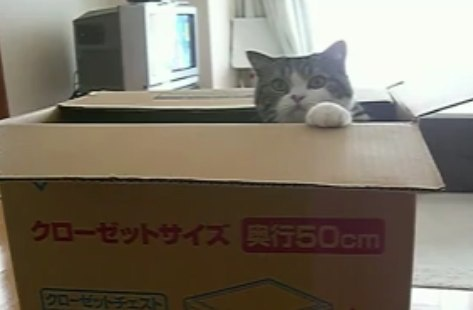 Cat in a Box (174 pictures) | Felines - Puss Tats - Gatto - Kitty Cat