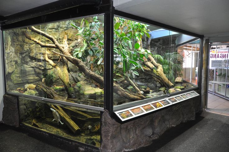 Террариум для игуаны своими руками фото