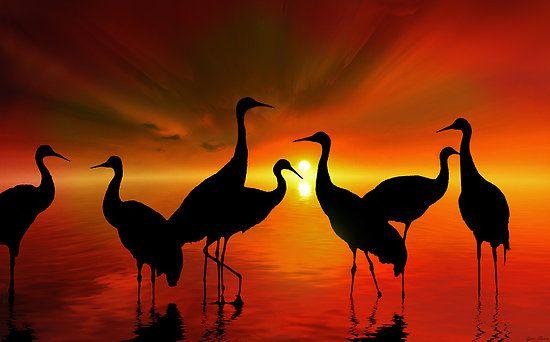 Water Sunset by Igor Zenin