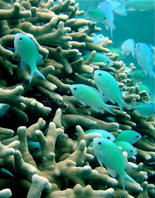turquoise fish among the coral