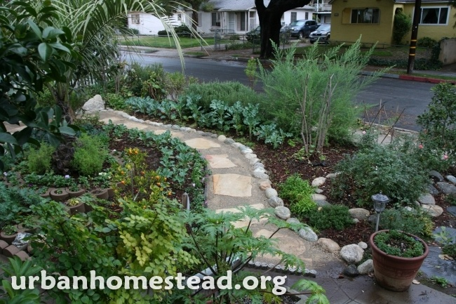 edible front garden so beautiful front yard vegetable