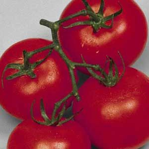 complete tomato growing guide
