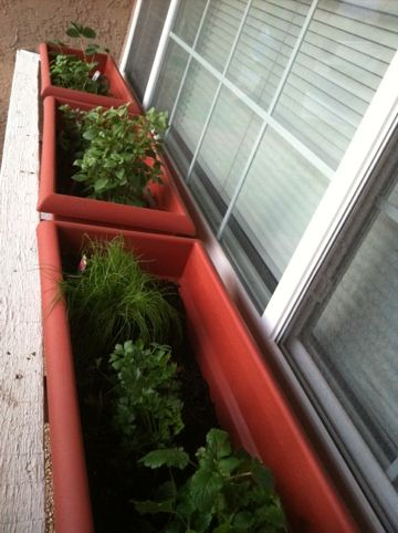 Do it yourself herb garden projects pinterest for Do it yourself garden