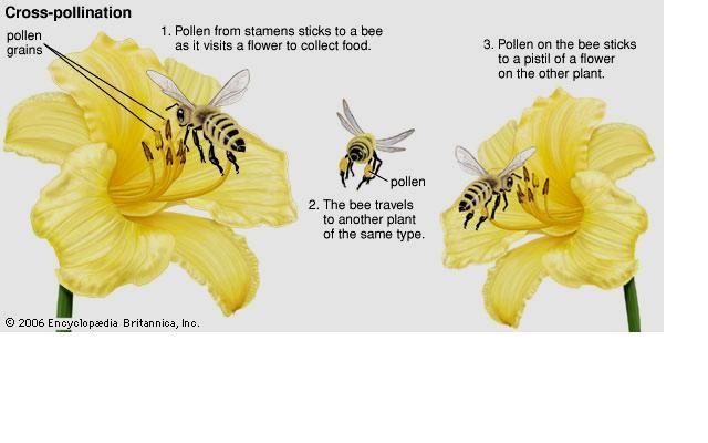 floriculture on emaze rh emaze com Moth Pollination Human Pollination