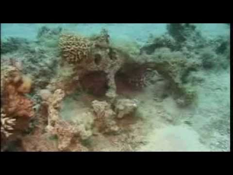 Red Sea Archaeological Discovery | LONG HAIRSTYLES