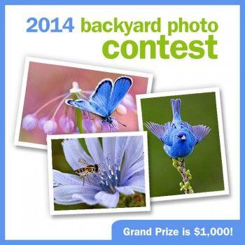 Birds amp blooms backyard photo contest birdsandblooms com