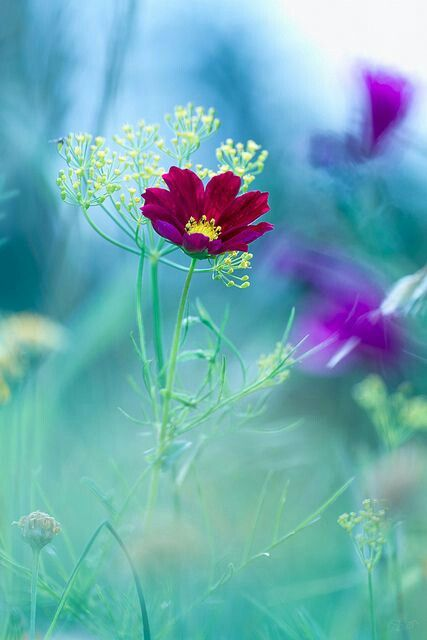 WHAT DREAMS AND LOVES TO BE SO PERFECT LIKE FLOWERS..
