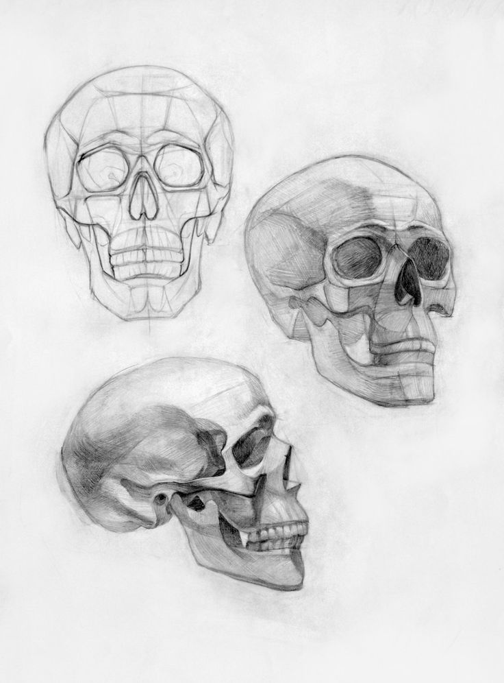Skull anatomy drawing 7499582 - follow4more.info