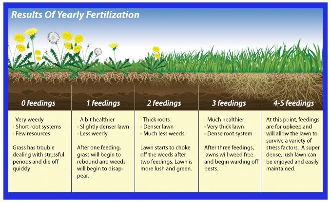Image Result For Lawn Feeding Schedule