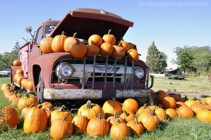 pumpkin truck | Holiday Fun! | Pinterest