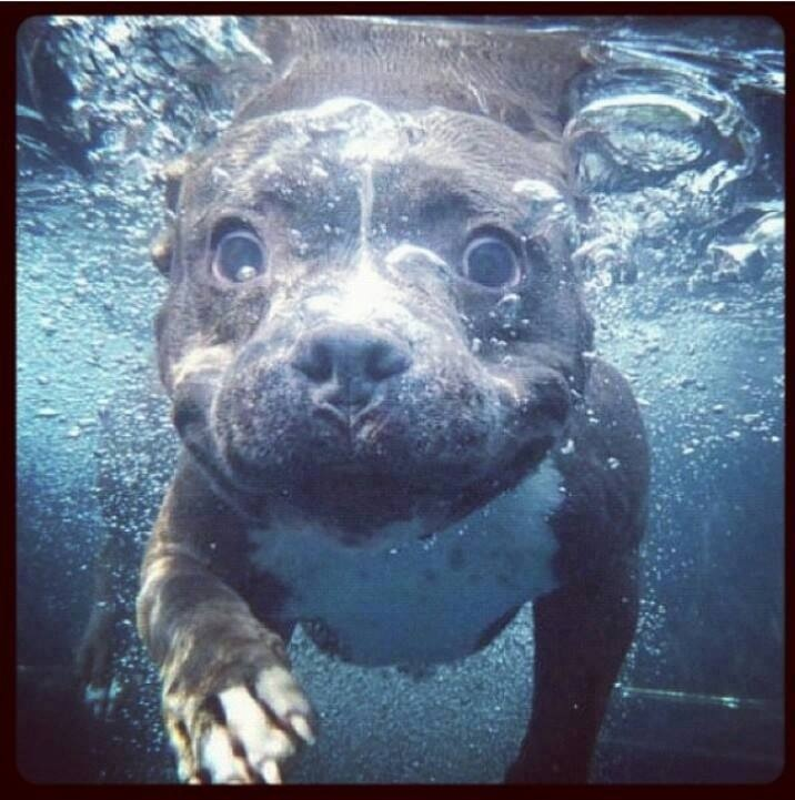 water pit puppies