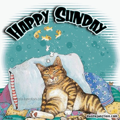 Image result for happy sunday cat image