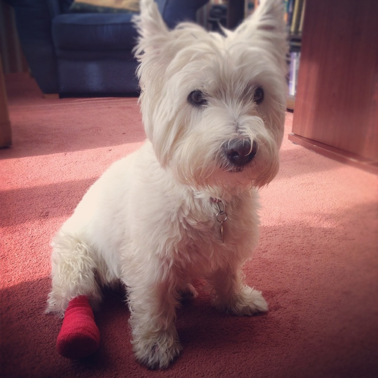 Bad Foot :( | Dogs Are Funny | Pinterest