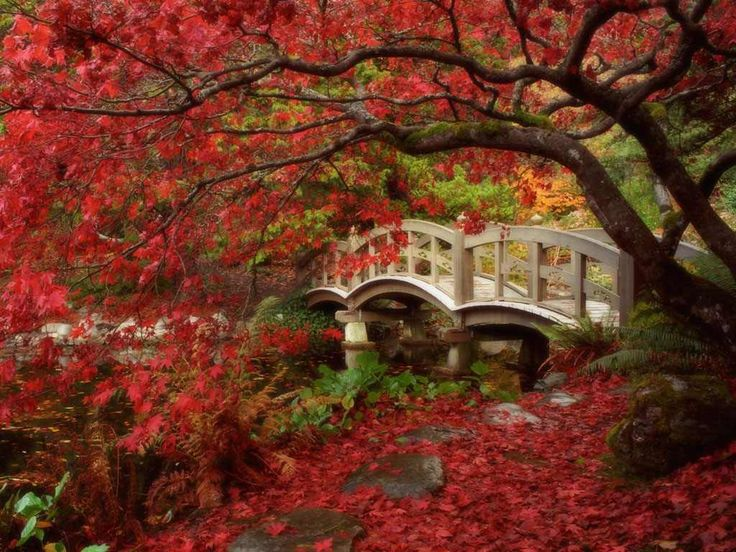 My favorite color leaves in the fall and the bridge is so pretty. I think this a picture perfect fall setting.