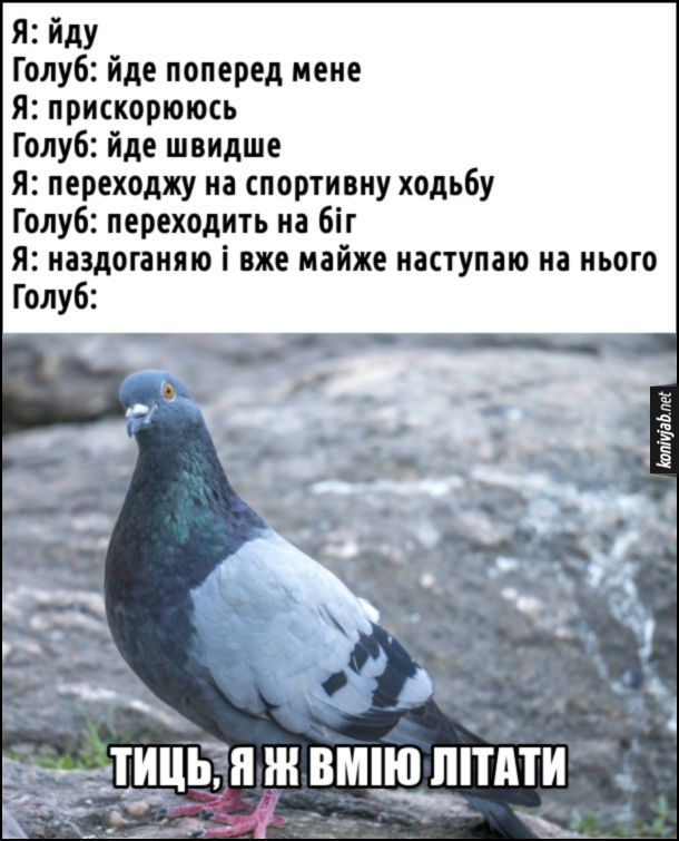 Анекдоты Про Голубых
