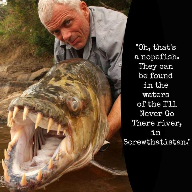 giant devil fish