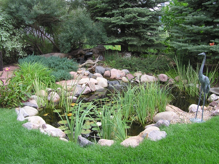 Longmont, CO pond  Backyard Ponds and Streams  Pinterest