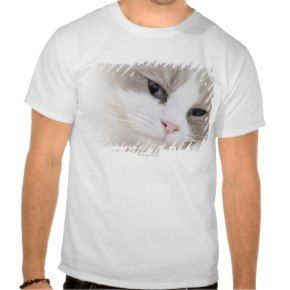 Ragdoll cat face t shirtsSeal Pointed Ragdoll Cat Tshirts - Click to