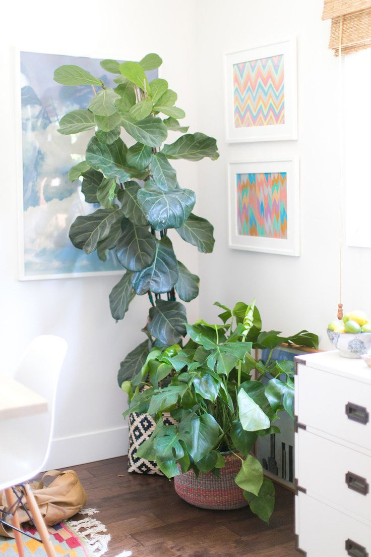 #potted-plants, #artwork, #fiddle-leaf-fig, #plants  Photography: Bryce Covey Photography - brycecoveyphotography.com  Read More: http://www.stylemepretty.com/living/2013/08/21/amber-interiors-home-tour/