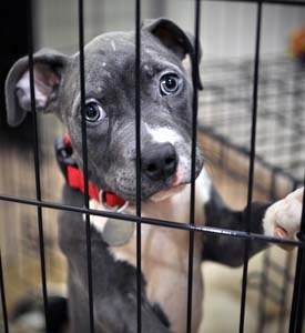 One Click Can Help Shelter Animals across the Nation!