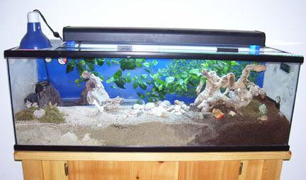 Pet hermit crab tanks - photo#9