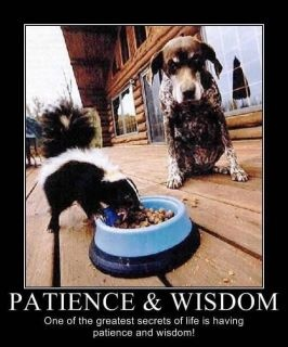 Patience and Wisdom - we could learn a lot from this puppy!
