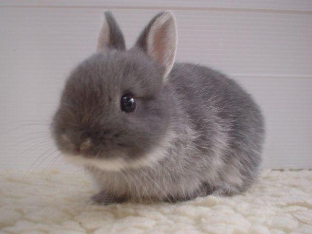 Baby wabbit!