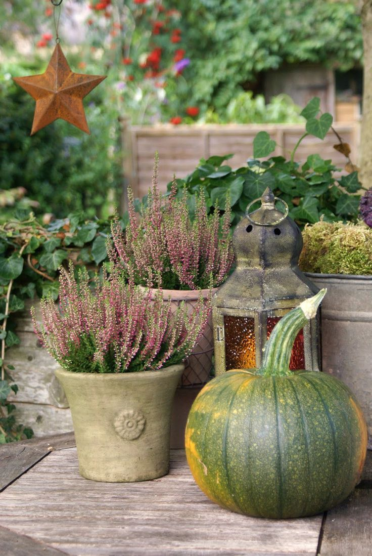 love this green pumpkin with pots of fallish plants