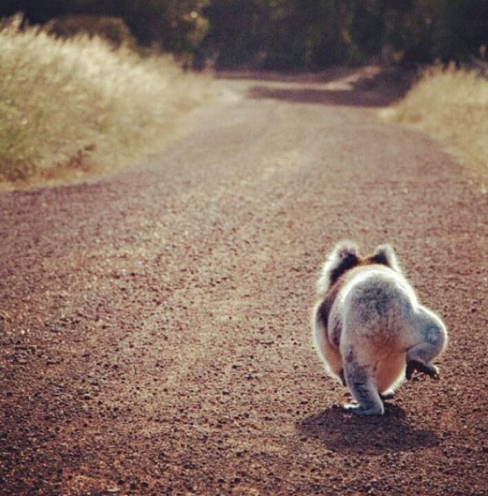 From seeaustralia of instagram animals pinterest