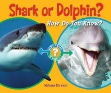 Compare and Contrast  Shark or Dolphin?: How Do You Know? (Which Animal Is Which?) Melissa Stewart: Books
