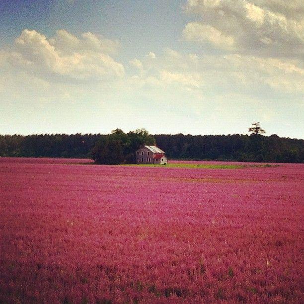 Lavender fields of north carolina dream home pinterest
