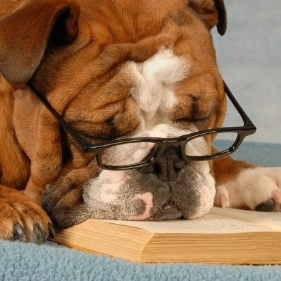 Image result for bulldog with glasses