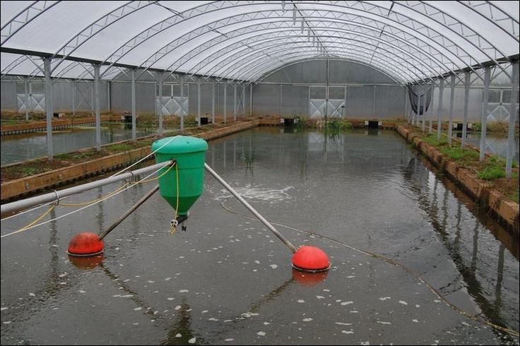 Fish farm ponds fish farm ponds pinterest for Fish farming business