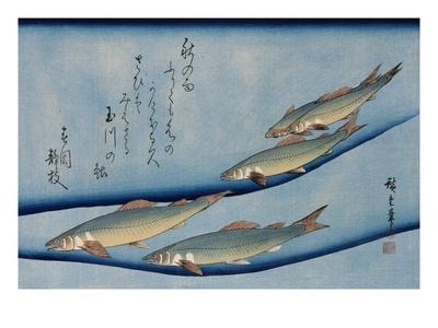 Rivertrout, from the Fish Series, Utagawa Hiroshige