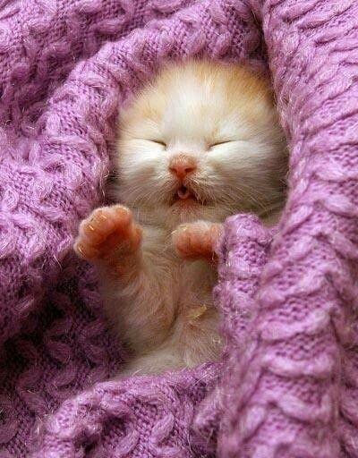 cute kitten sleeping baby cuteness | Cute Animals | Pinterest