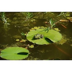 Nature Watchers: Peek in the Pond Apex, NC #Kids #Events