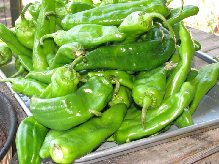 Anaheim Chili Peppers | Chilis | Pinterest
