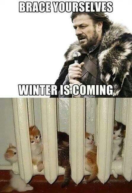 We re ready freddie cute animal memes pinterest