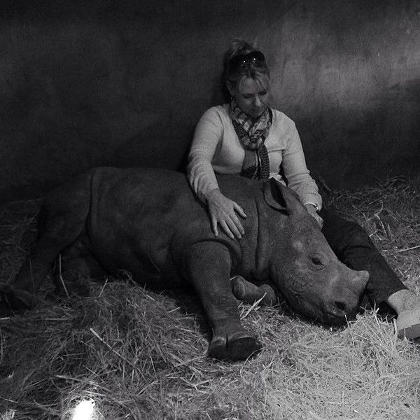 Orphaned Baby Rhino Can't Sleep Alone After Watching His Mother Get Killed by Poachers http://sulia.com/my_thoughts/af381a77-cfae-48fc-94c3-14c0ecc0b74e/?source=pinaction=shareux=monobtn=smallform_factor=desktopsharer_id=124805973is_sharer_author=truepinner=124805973