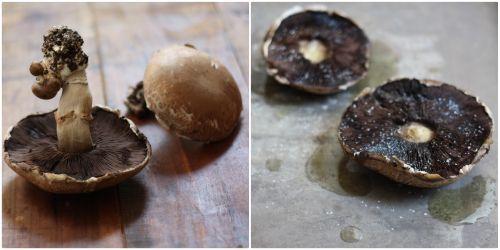 Herbed Quinoa Stuffed Portobello Mushrooms | E.A.T.: Parmesan & Herbed ...