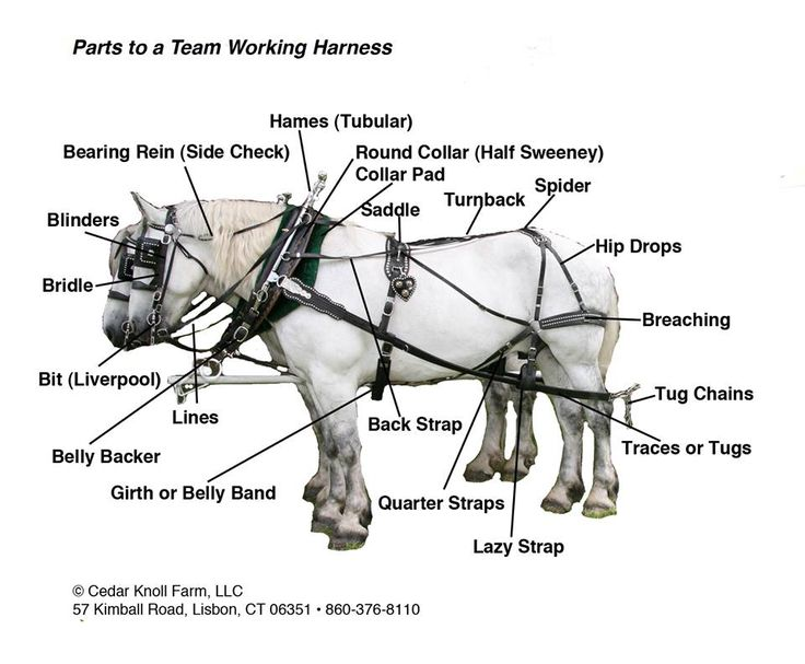 Parts Of A Draft Horse Harness in addition Watch moreover Marine Battery Switch besides Minn Kota Riptide 55s Parts 1998 together with 12 Volt Battery Parallel Wiring. on trolling wiring diagram