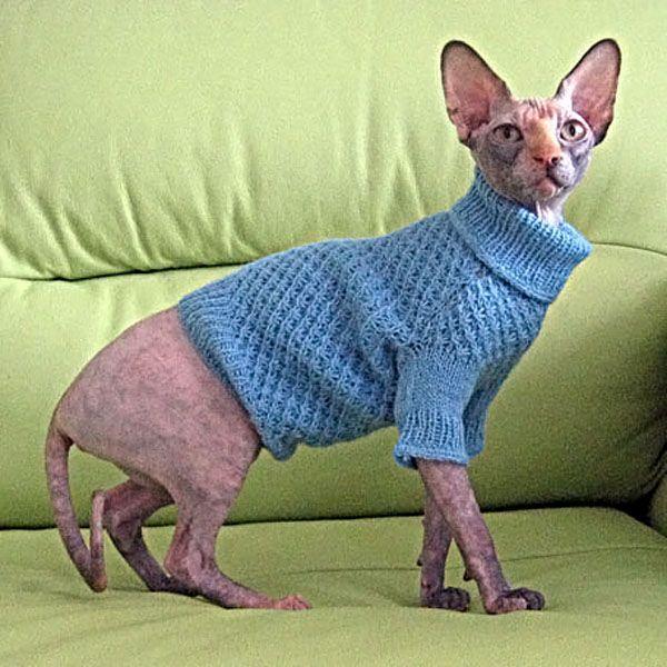 Вязание кофта для кошки 797