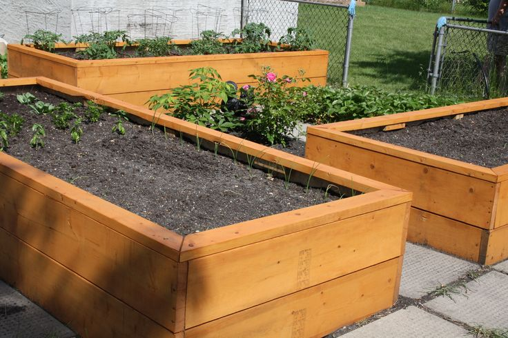 Pin by susan livingston on outdoors pinterest for Above ground vegetable garden