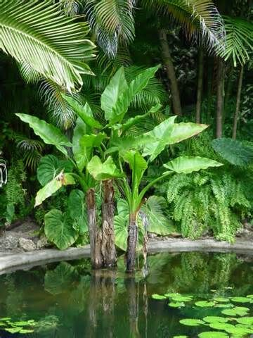 Aquatic plants for ponds aquatic plants from florida for Using pond water for plants