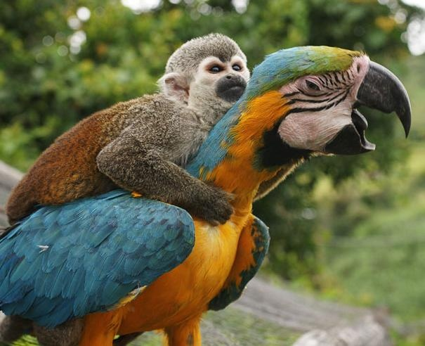 it's like avatar but a monkey and a macaw