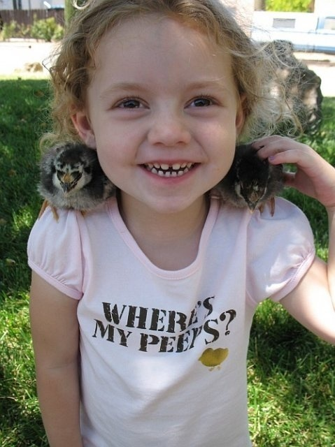 basics of raising backyard chickens pins-i-like