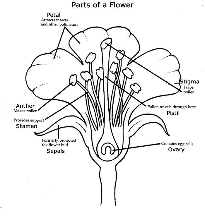 Flower parts blank